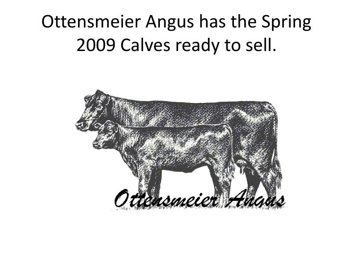 Ottensmeier Angus has the Spring 2009 Calves ready to sell.