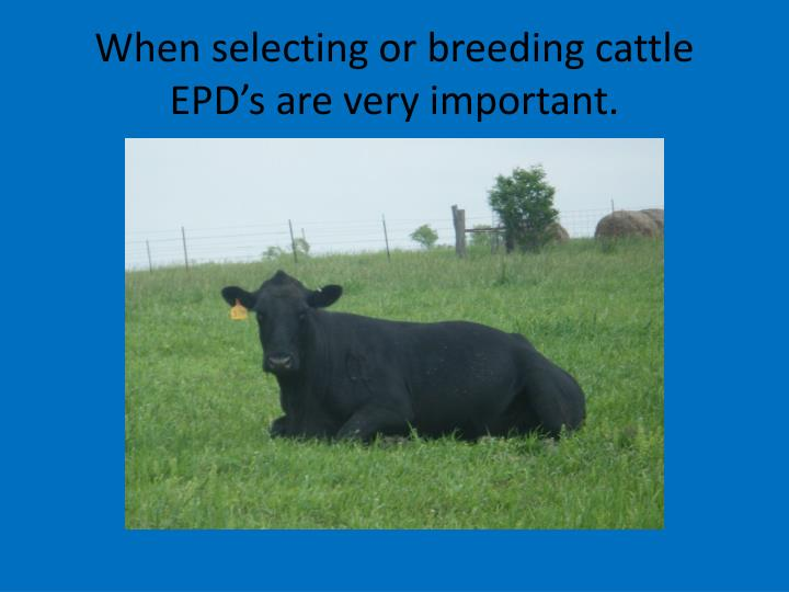 When selecting or breeding cattle EPD's are very important.