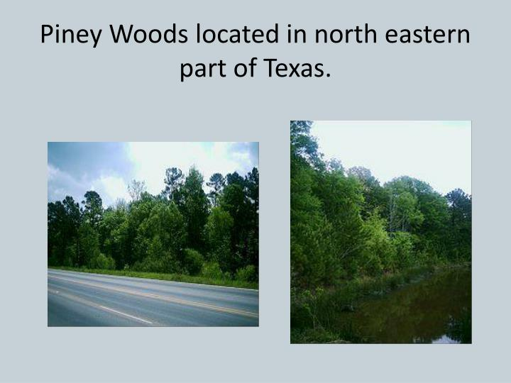 Piney Woods located in north eastern part of Texas.