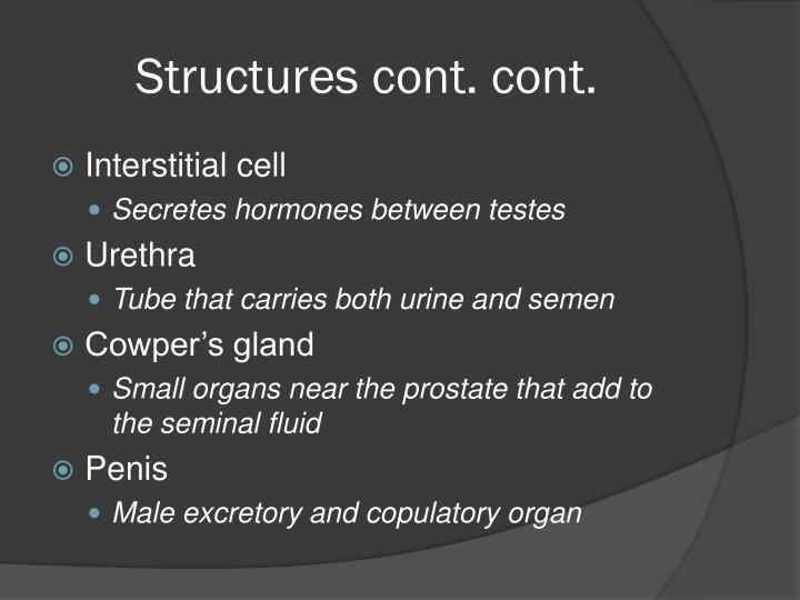 Structures cont. cont.