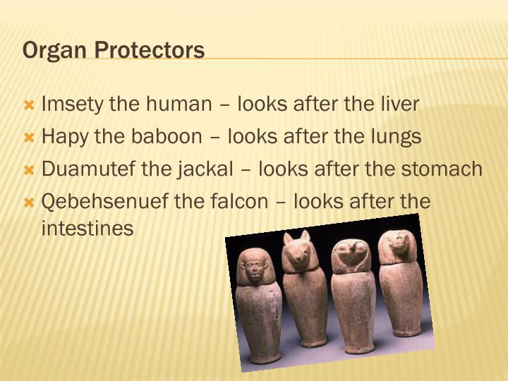 Organ Protectors