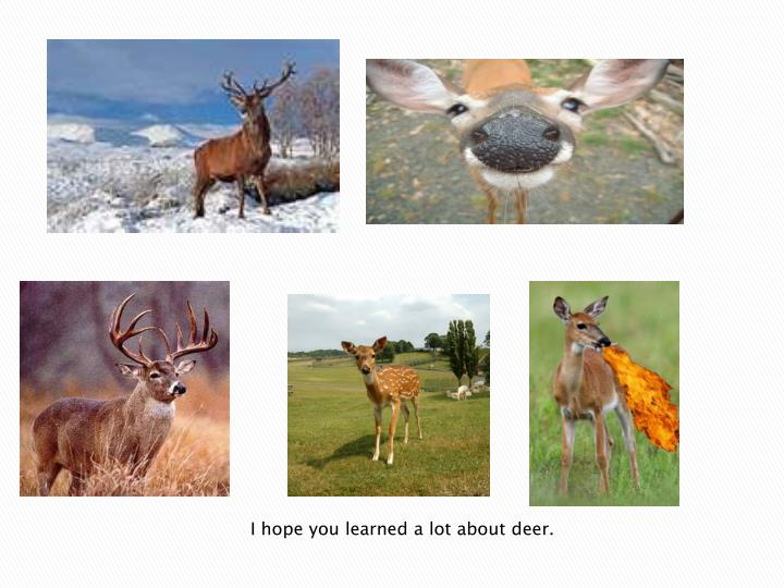 I hope you learned a lot about deer.