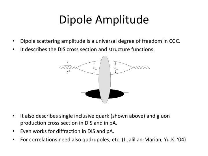 Dipole Amplitude