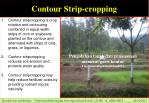contour strip cropping