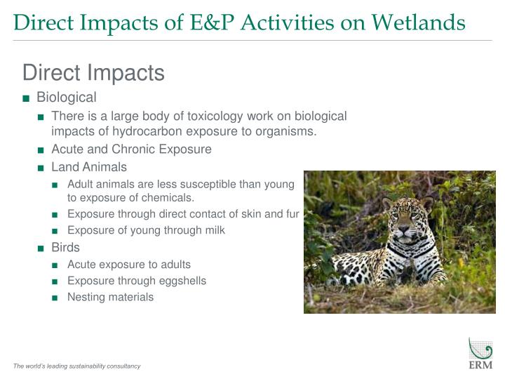 Direct Impacts of E&P Activities on Wetlands
