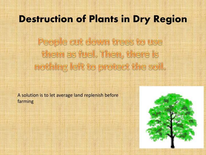 Destruction of Plants in Dry Region