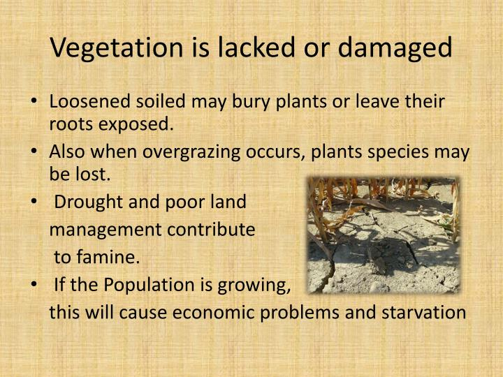 Vegetation is lacked or damaged