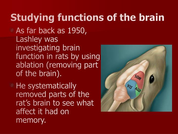 Studying functions of the brain