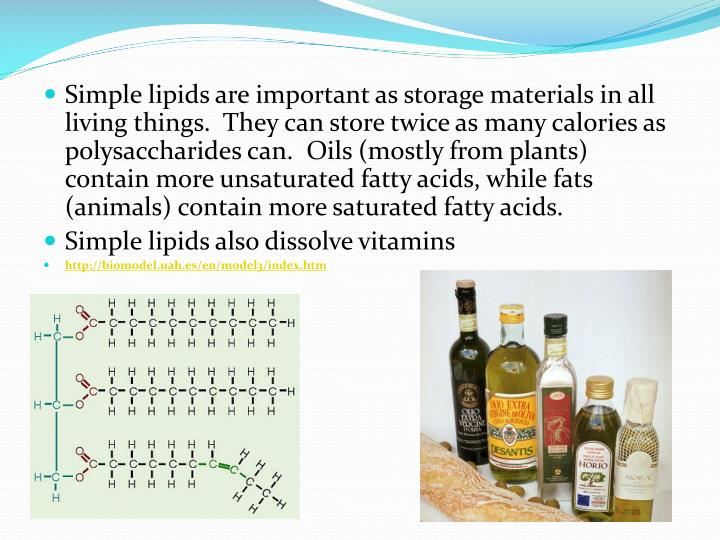 Simple lipids are important as storage materials in all living things.  They can store twice as many calories as polysaccharides can.  Oils (mostly from plants) contain more unsaturated fatty acids, while fats (animals) contain more saturated fatty acids.