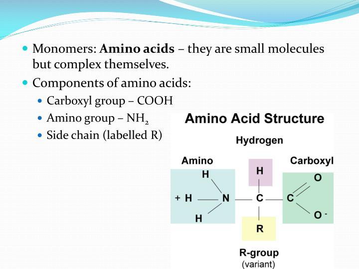 Monomers: