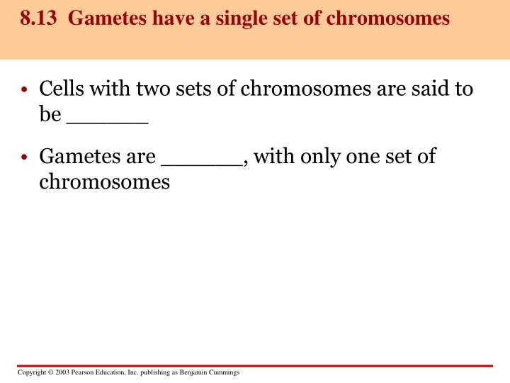 8.13  Gametes have a single set of chromosomes