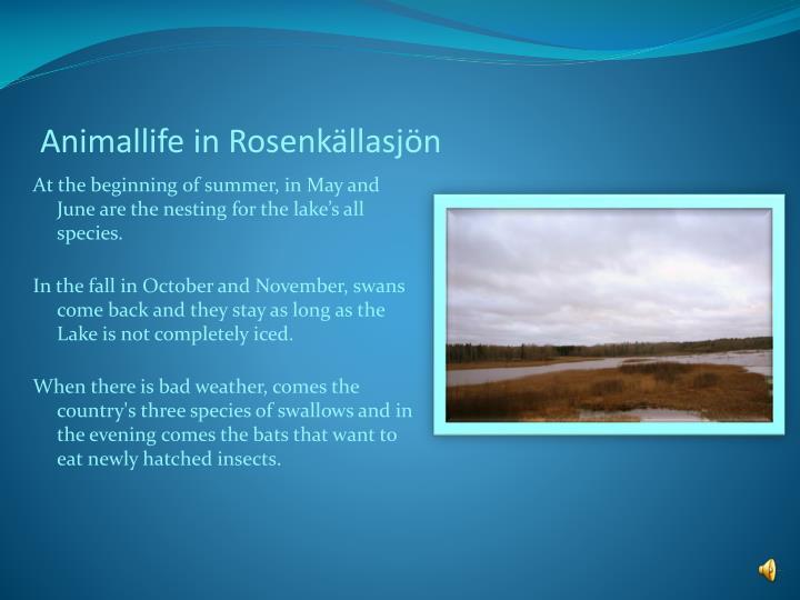 Animallife in Rosenkällasjön