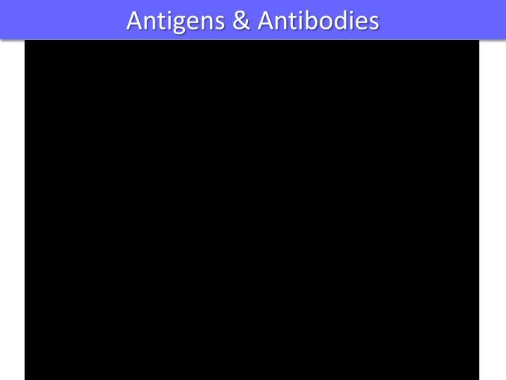 Antigens & Antibodies