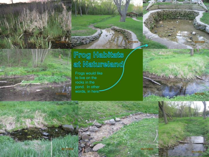 Frog Habitats at Natureland