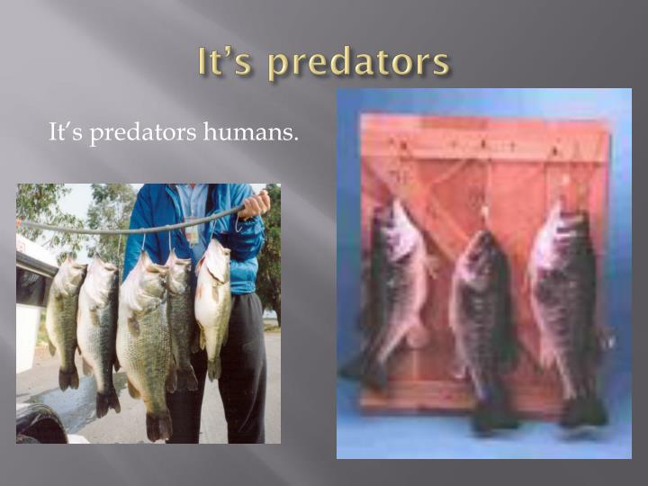 It's predators