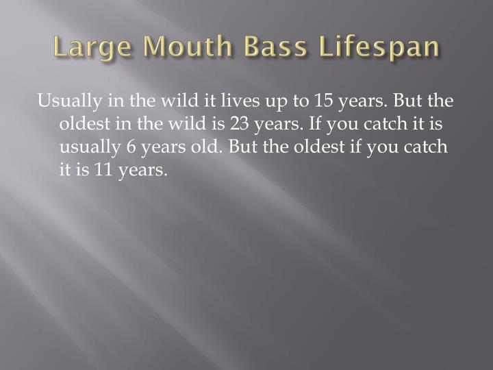 Large Mouth Bass Lifespan
