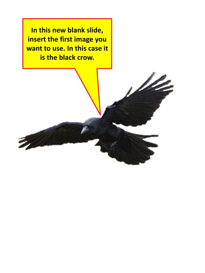 In this new blank slide, insert the first image you want to use. In this case it is the black crow.