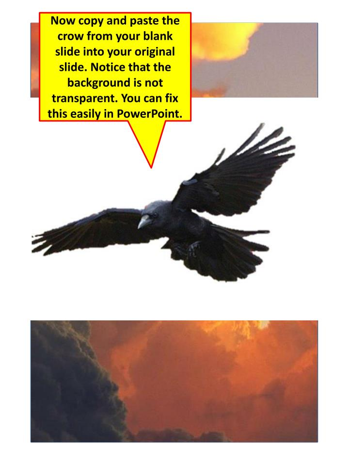 Now copy and paste the crow from your blank slide into your original slide. Notice that the background is not transparent. You can fix this easily in PowerPoint.