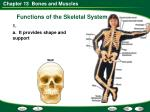 functions of the skeletal system1