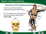 functions of the skeletal system14