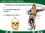 functions of the skeletal system2