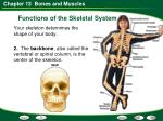 functions of the skeletal system7