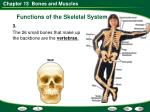 functions of the skeletal system8