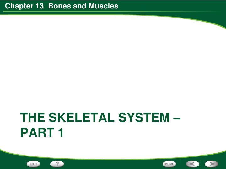 THE SKELETAL SYSTEM – PART 1