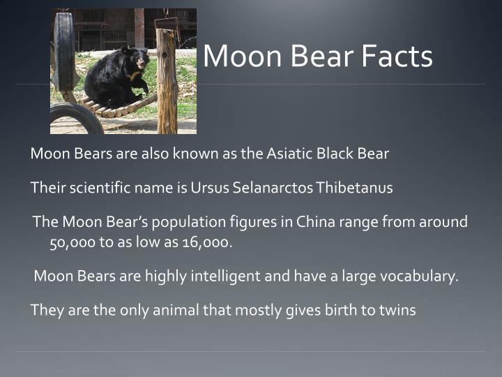 Moon Bear Facts