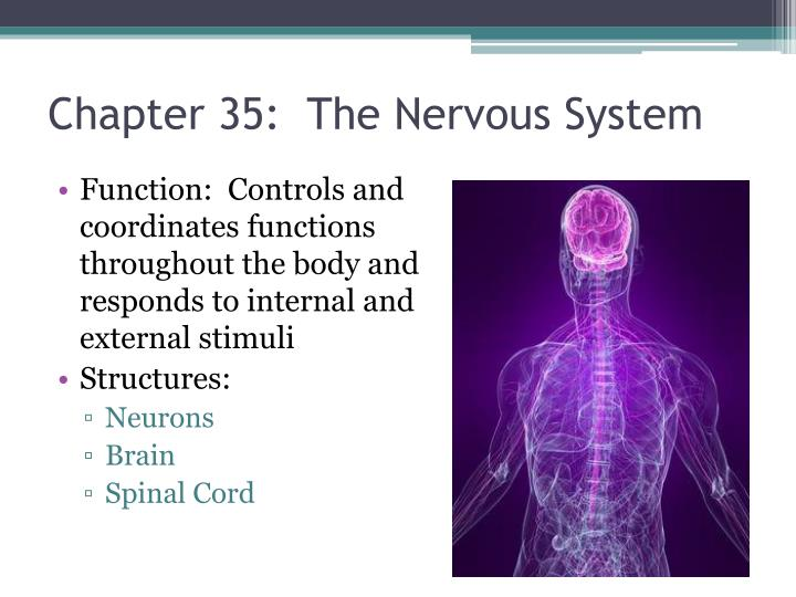 Chapter 35:  The Nervous System