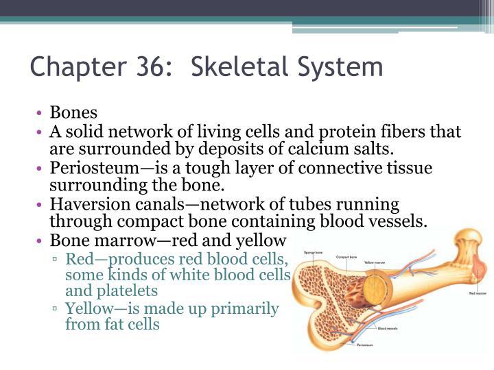Chapter 36:  Skeletal System