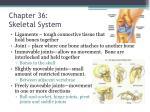 chapter 36 skeletal system2
