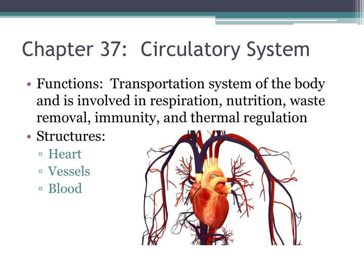 Chapter 37:  Circulatory System