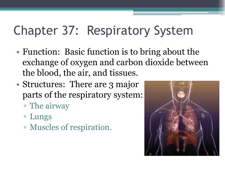 Chapter 37:  Respiratory System