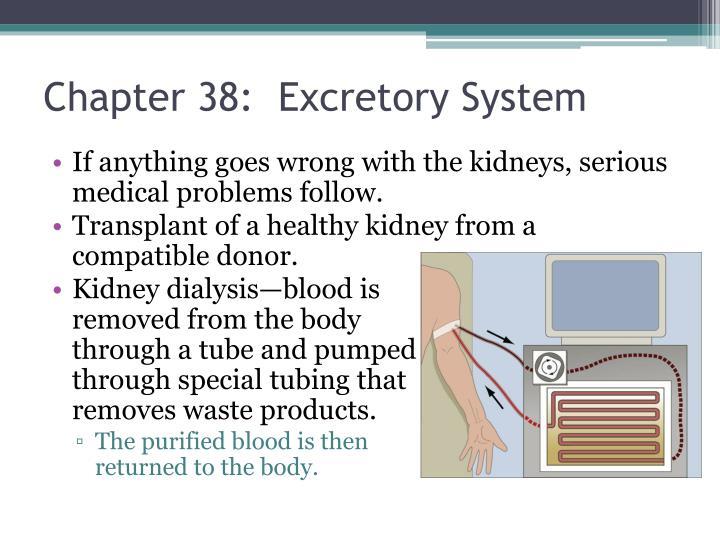 Chapter 38:  Excretory System