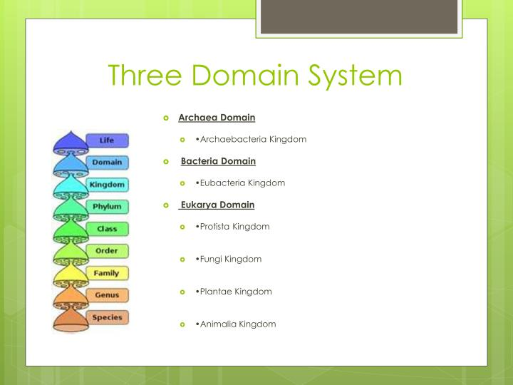 Three Domain System