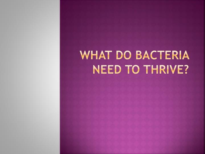 What do bacteria need to thrive?