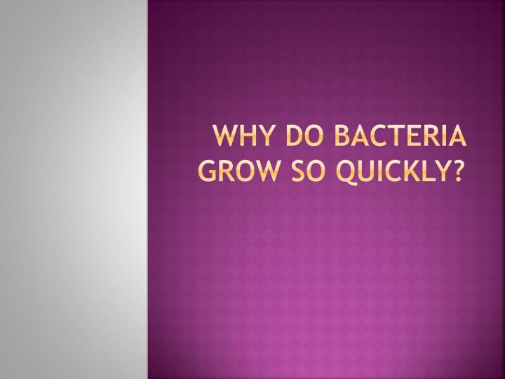 Why do bacteria grow so quickly?