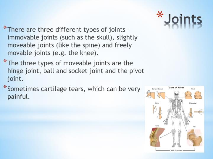 There are three different types of joints – immovable joints (such as the skull), slightly moveable joints (like the spine) and freely movable joints (e.g. the knee).