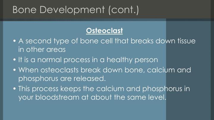 Bone Development (cont.)
