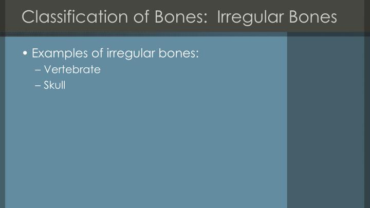 Classification of Bones:  Irregular Bones