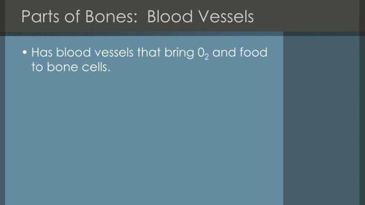 Parts of Bones:  Blood Vessels