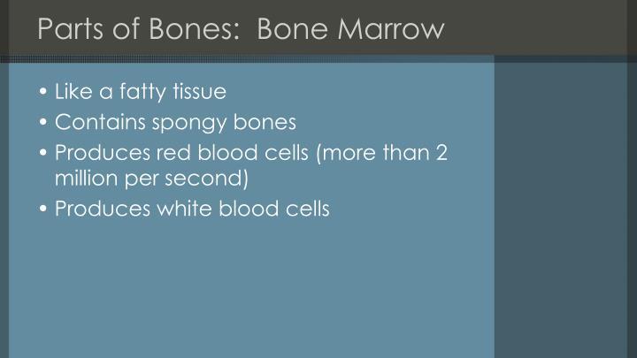 Parts of Bones:  Bone Marrow