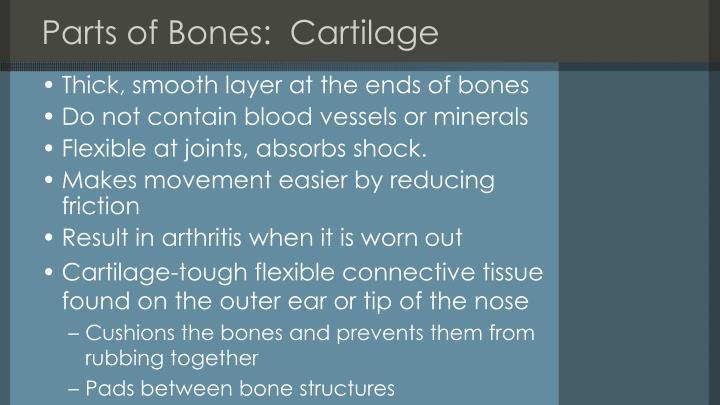Parts of Bones:  Cartilage