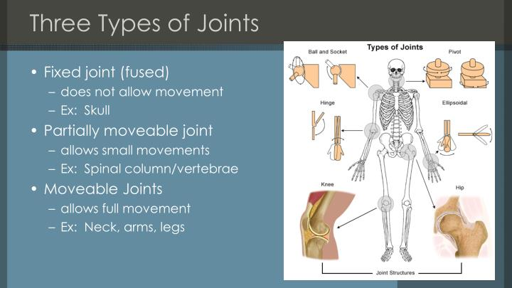 Three Types of Joints
