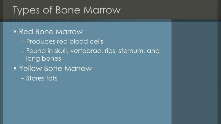 Types of Bone Marrow