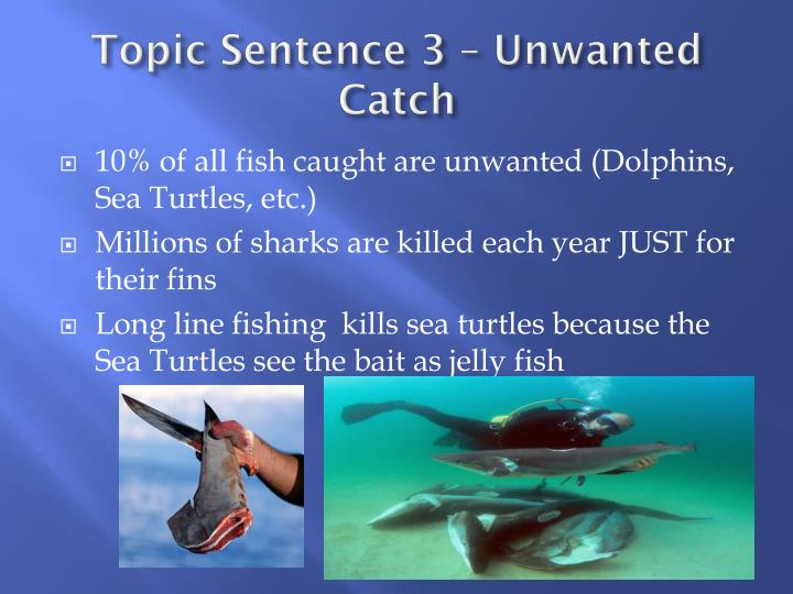 Topic Sentence 3 – Unwanted Catch
