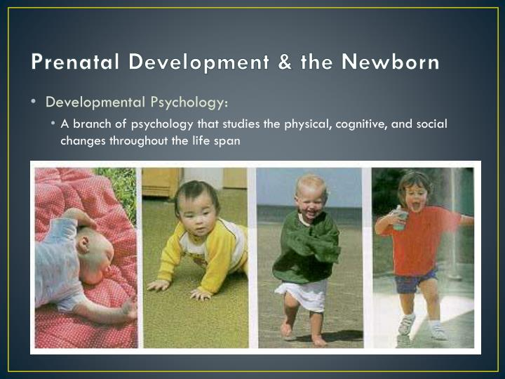 Prenatal development the newborn