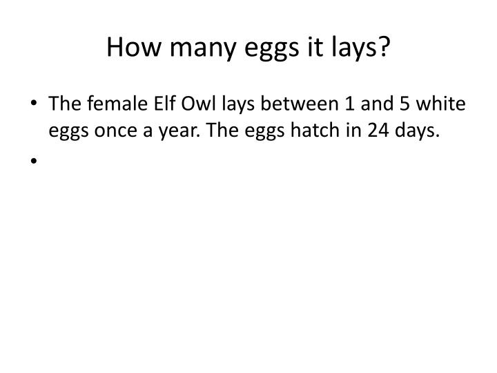 How many eggs it lays?