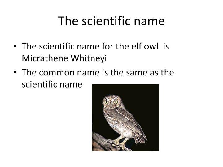 The scientific name